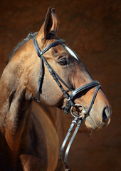 A beautiful purebred bay horse looking away in stable door