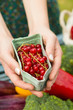 Hands holding carton of redcurrants