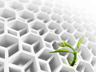 Abstract white honeycomb structure and flower