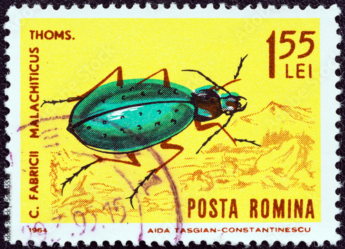 Carabus fabricii malachiticus (ground beetle) (Romania 1964)
