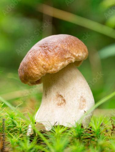 cep in the forest