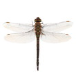 dragonfly macro isolated on white background