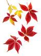 Harmonisches Arrangement aus Herbstblättern