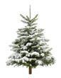 Perfekter verschneiter Weihnachtsbaum, isoliert