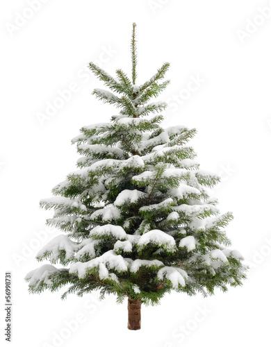 canvas print picture Perfekter verschneiter Weihnachtsbaum, isoliert