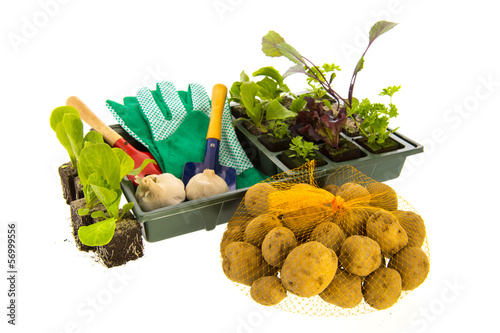 Vegetables and herbs for vegetable garden