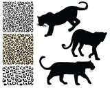 Silhouettes of tigers and illustration of fur, vector