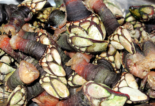 Juicy Galician barnacles cooked