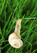 Beautiful snail on green grass, close up