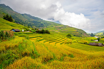 Terraced rice fields in Sapa, Lao Cai, Vietnam