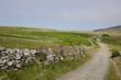 digitale pourprée, Ile de Ramsey, Pays de Galles