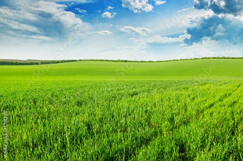 Fototapeten,feld,himmel,landschaft,wiese