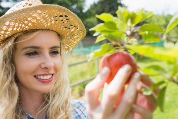 Young blonde picking an apple from a tree