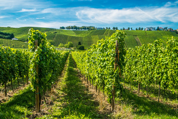 Vineyards along the Moselle river, Luxembourg
