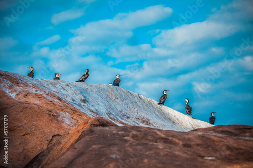 Birds on the rock