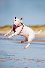 funny dog jumps up