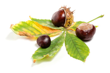 Chestnuts with colorful leaf on white background