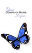 Blue solar butterfly customizable