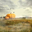 Big pumpkins in a field, halloween time