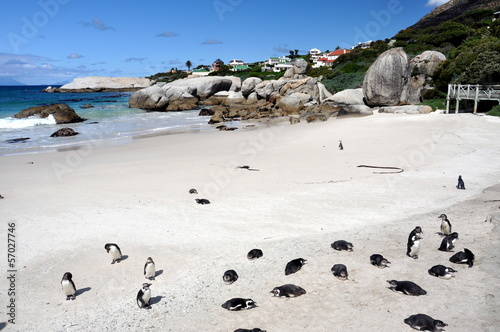 Tuinposter Pinguin Jackass penguin at The boulders beach