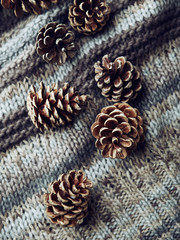 Cones on a woolen fabric