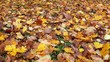 bright autumn maple leaves lying on the ground
