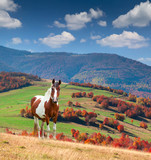 Colorful autumn landscape in mountains with horse