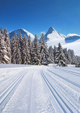 cross-country ski trail