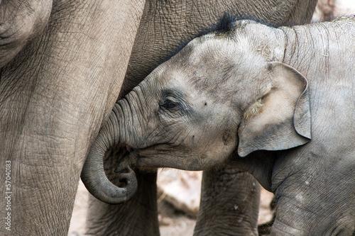 Fototapeten,elefant,ashtray,baby,grau