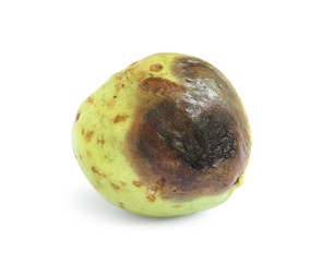 Rotten guava fruit isolated on white background