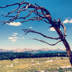 dead tree in the mountains