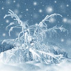 Winter scenery, snowstorm