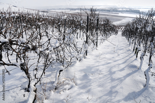 Snow farm vineyard. Germany