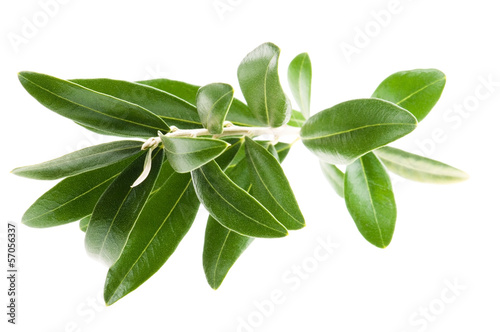 Fotobehang Olijfboom Fresh olive branch leaves isolated on white background