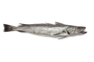 Single fresh Hake fish