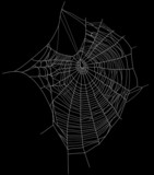 spider web detailed vector illustration