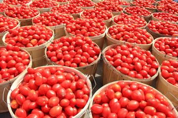 Tomato Bushels 2