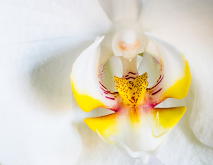 Close up orchidea