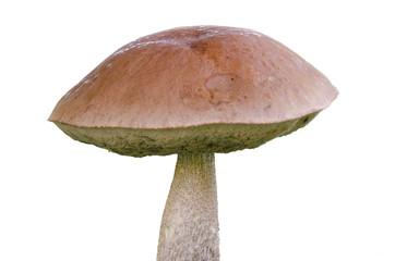 Jersey cow mushroom
