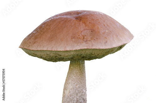 Jersey cow mushroom - 57075954