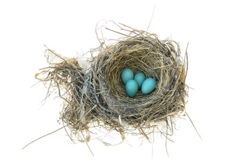 Robin's Bird Nest