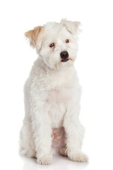 Beautiful Dog isolated on white background