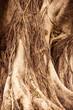 Fototapeten,aging process,hintergrund,baumpilz,verzweigt