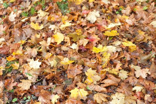 feuilles d'automne en sous-bois