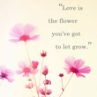Inspirational quote word by John Lennon and pink blossom flowers