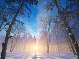 Winterlandschaft am Abend - sun dawn in winter forrest