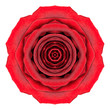 Mandala Rose Flower Kaleidoscope Isolated on White