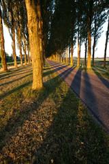 tree shadows pattern on road