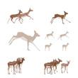 Antelope illustration set - design elements
