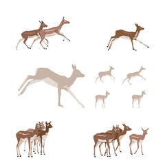Antelope illustration set - design elements